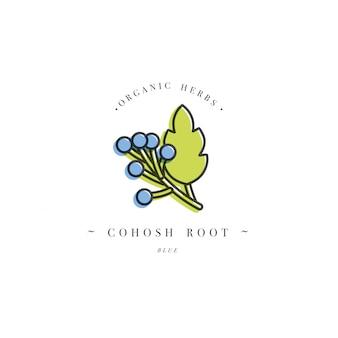 Kolorowe logo szablon i godło zdrowe zioło-niebieski korzeń cohosh. logo w modny styl liniowy na białym tle.