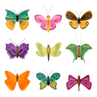 Kolorowe motyle.