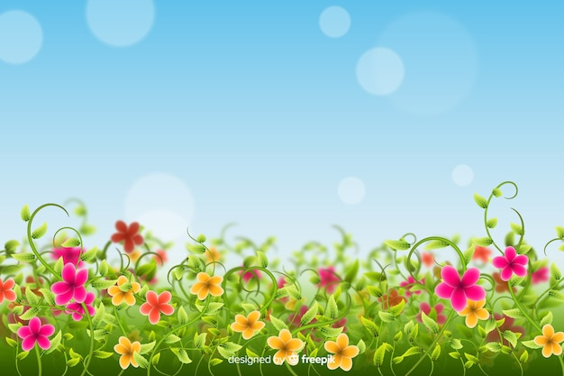 Kolorowe pola kwiatów tła