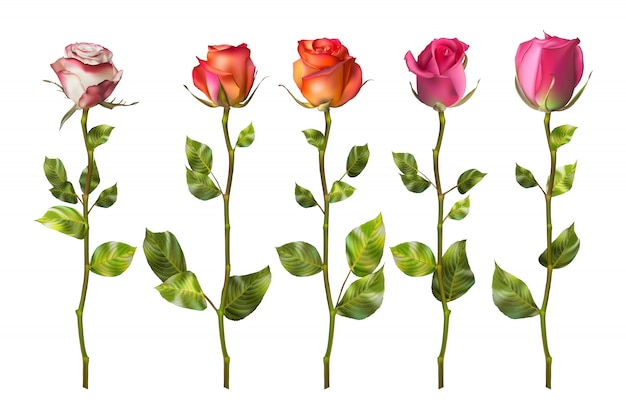 Kolorowe róże zestaw kwiatów.