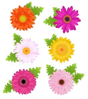 Kolorowe stokrotki (pomarańczowy, różowy, magenta, żółty) z liśćmi, na białym tle