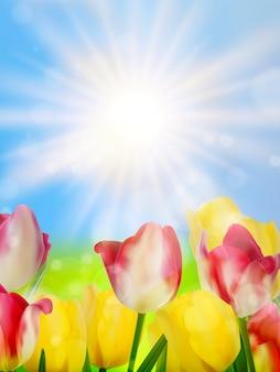 Kolorowe wiosenne kwiaty tulipany.