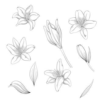 Kolorowy kwiat lilii, zestaw kwitnących kwiatów dla swojego projektu.