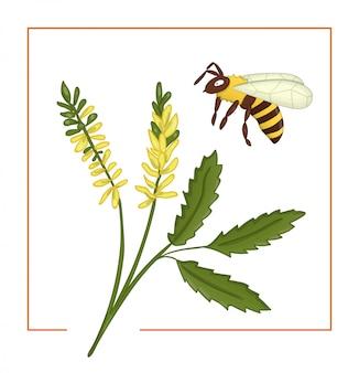 Kolorowy melilot lub słodka koniczyna z pszczołą.