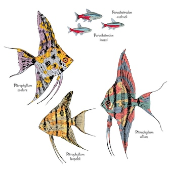 Kolorowy rysunek ryb akwariowych z neonami i skalary różnych typów