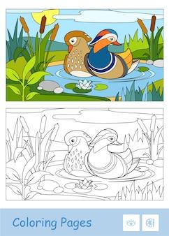 Kolorowy szablon i bezbarwna ilustracja konturowa kaczki mandarynki unoszącej się na leśnej rzece w pobliżu trzcin i lilii wodnych. aktywność rozwojowa ptaków dla dzieci.