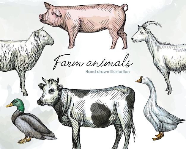 Kolorowy szkic akwarela odręczny zestaw zwierząt hodowlanych na białym tle. żywy inwentarz. zwierzęta domowe. świnia, biała gęś z długą szyją, kaczka, owca, koza