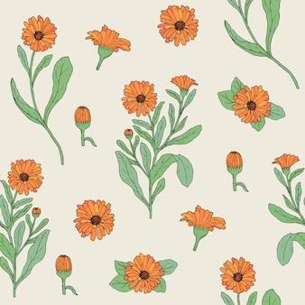 Kolorowy wzór botaniczny z kwitnącą rośliną nagietka, ręcznie rysowane główki kwiatów i pąki.