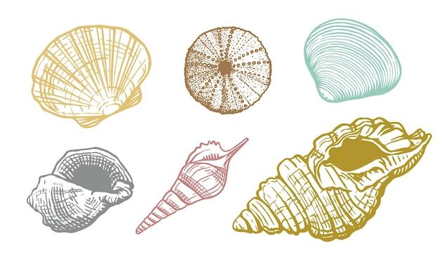 Kolorowy zestaw muszli. piękne ręcznie rysowane ilustracji powłoki. realistyczna natura morskiego mięczaka wodnego