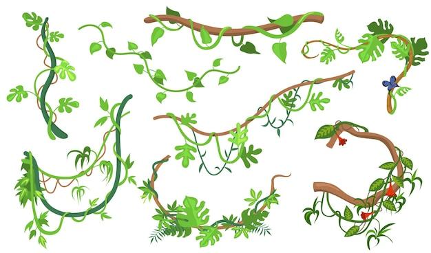 Kolorowy zestaw roślin liany lub dżungli do projektowania stron internetowych. kreskówka, wspinaczka gałązki tropikalnej winorośli i drzew na białym tle kolekcja ilustracji wektorowych. koncepcja lasu deszczowego, zieleni i roślinności