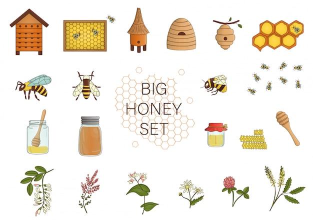 Kolorowy zestaw z miodem, pszczołą, trzmielem, ulem.