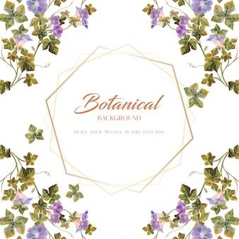Koloru wodnego ranku chwały stylu botanicznego cztery narożnikowy projekt w złotym sześciokąta temacie na białej tło ilustraci ramie