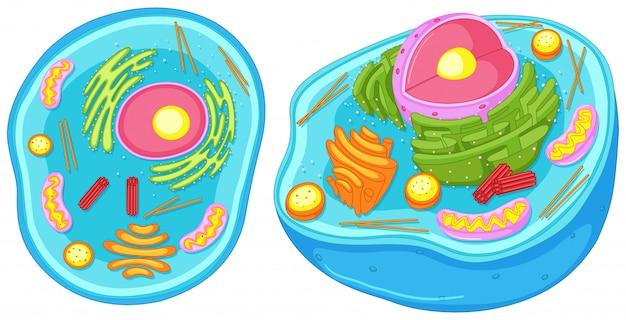 Komórka zwierzęca w bliższym spojrzeniu