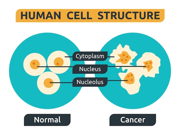 Komórka