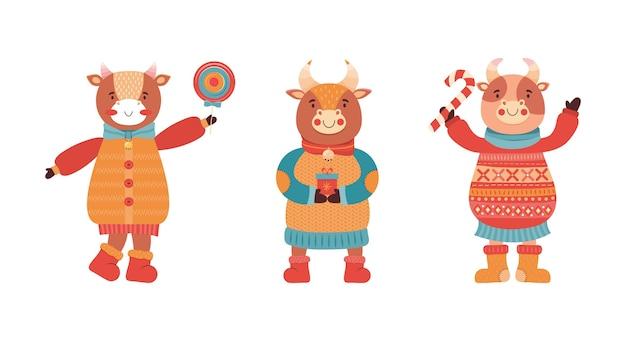 Komplet kreskówka byki śmieszne dziecko. maskotka nowego roku 2021. urocza postać zwierzęcia w zimowych ubraniach z prezentem i słodyczami. krowa, bawół, cielę, wół na imprezie noworocznej.
