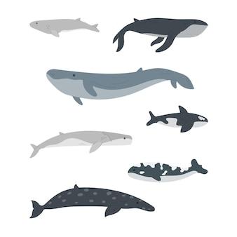 Komplet kreskówka wieloryb na białym tle