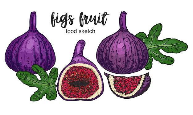 Kompozycja fig z całymi ciętymi owocami, rysowana w kolorowym stylu szkicu