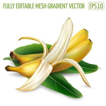 Kompozycja z dojrzałych bananów i liści palmowych