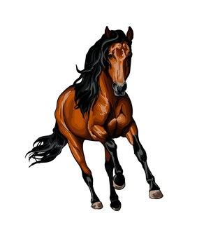 Koń biegnący w galopie od pluska akwareli kolorowy rysunek realistyczny