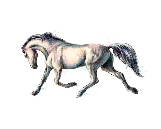 Koń biegnie galopem od plusku akwareli. ręcznie rysowane szkic. ilustracja farb