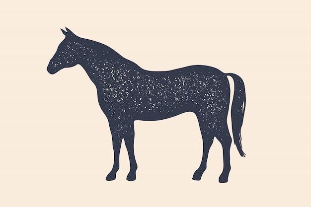 Koń, ogier. koncepcja zwierząt gospodarskich