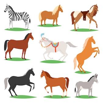Koń wektor zwierząt rasy koni lub jeździectwo i jeździectwo lub koni ogier ilustracja zwierzęca horsy zestaw zebra kucyk i postać osła na białym tle