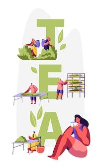 Koncepcja herbaty. postacie męskie i żeńskie w tradycyjnych indyjskich strojach zbierają świeże liście herbaty na plantacji, kobieta pije herbatę. plakat, ulotka, broszura. ilustracja wektorowa płaski kreskówka