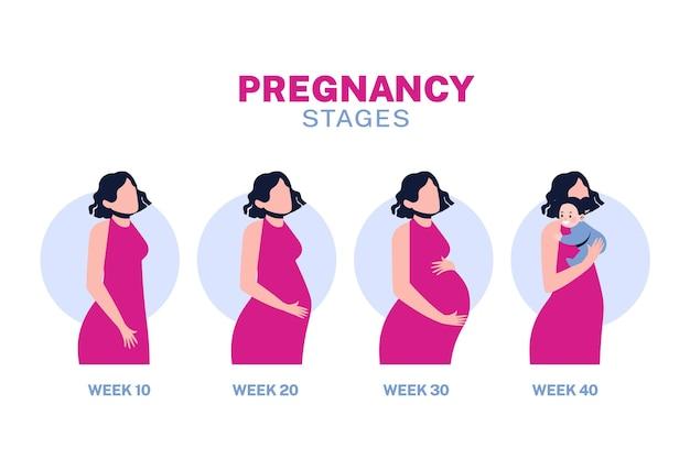 Koncepcja ilustracja etapy ciąży