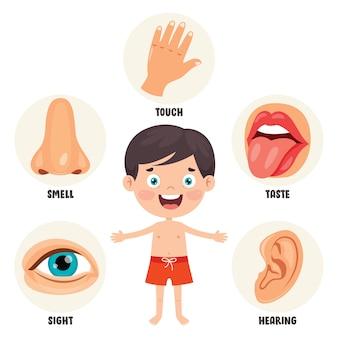 Koncepcja pięciu zmysłów z narządami ludzkimi dla dzieci