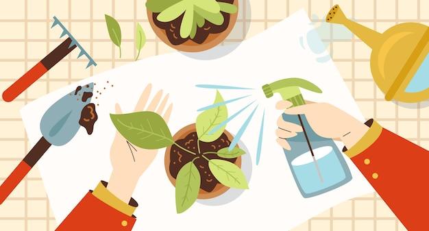 Koncepcja przedszkola i pielęgnacji roślin doniczkowych z widokiem z góry na ręce osoby uprawiającej rośliny doniczkowe. pomieszczenia florystyka i ogrodnictwo, płaskie wektor ilustracja.