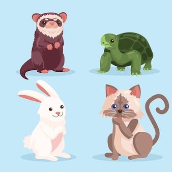Koncepcja słodkie zwierząt domowych