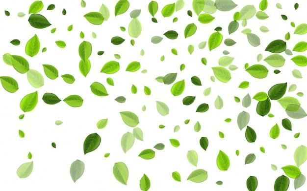 Koncepcja wektor las liści mięty. liście wiosny