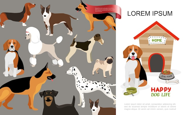 Koncepcja życia płaskiego szczęśliwego psa z różnymi rasami psów i beagle siedzi w pobliżu miski hodowli smyczy kostnej do jedzenia