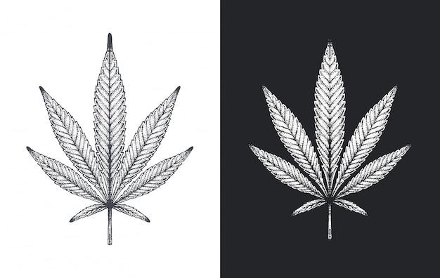Konopie indyjskie lub marihuana pozostawia szkic wektor