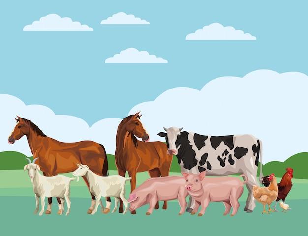 Końska krowa świnia koza kogut kura