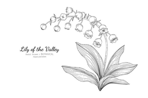 Konwalia kwiat i liść ręcznie rysowane ilustracja botaniczna z grafiką.