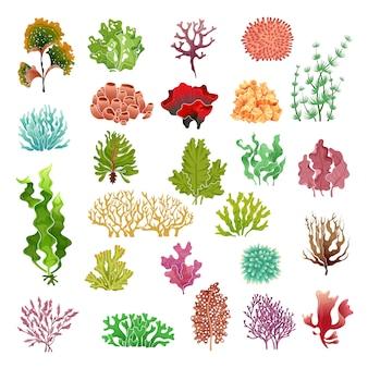 Koral i wodorosty. podwodna flora, wodorosty morskie akwarium gra wodorosty i koralowce. zestaw roślin oceanicznych