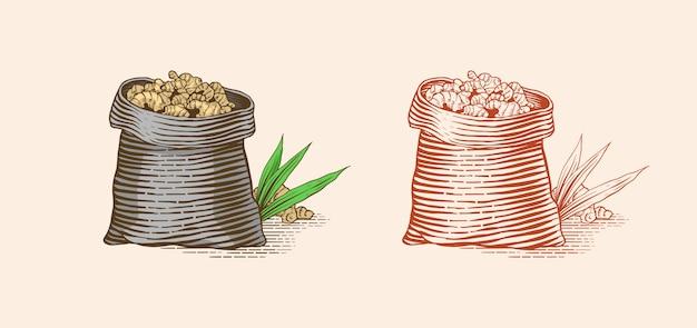Korzeń imbiru w torbie, posiekane kłącze, świeża roślina.