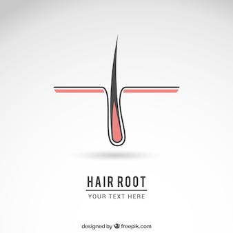 Korzeń włosa logo