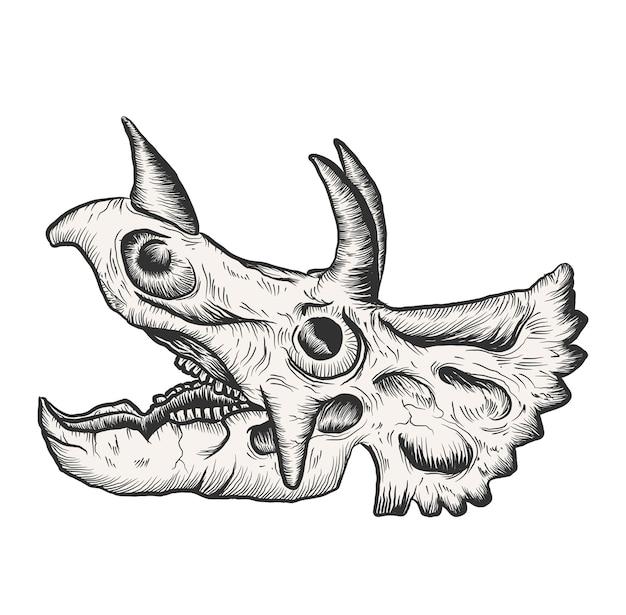 Kości czaszki zwierząt triceratopsa dinozaurów do edukacji naukowej