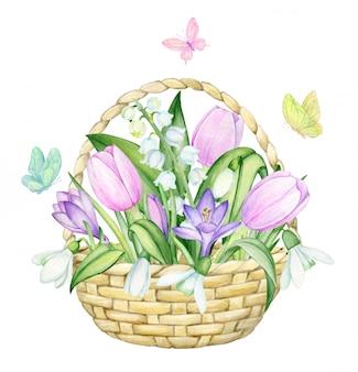 Kosz wiklinowy, tulipany, krokusy, konwalie, przebiśniegi, motyle. akwarela, wiosna, koncert na na białym tle.