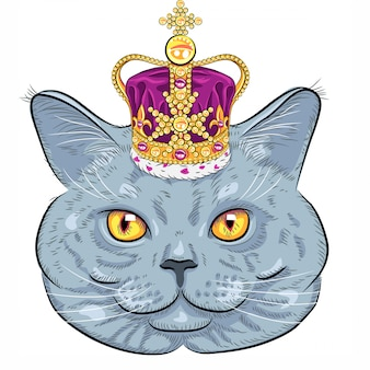 Kot brytyjski w złotej koronie