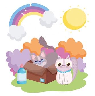 Kot i inne w pudełku zwierzęta domowe krajobraz słońca