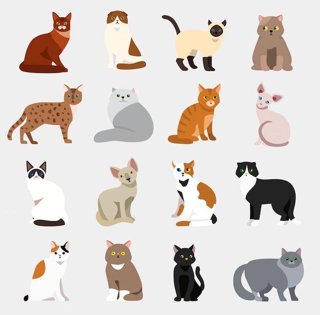 Kot rasy słodkie zwierzę domowe zestaw ilustracji zwierząt ikony kreskówka różnych kotów