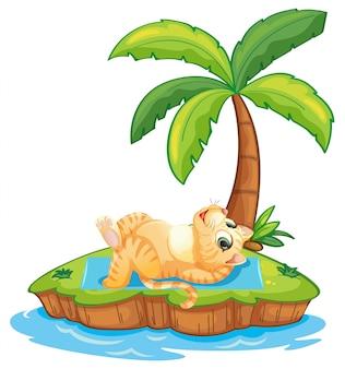 Kot relaksuje się na wyspie