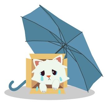 Kot siedzi w pudełku i pod niebieskim parasolem. koty wyglądają na nieszczęśliwych i smutnych.