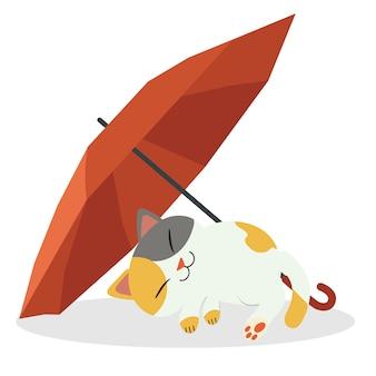 Kot śpi pod czerwonym parasolem. koty wyglądają na szczęśliwe i relaksujące.