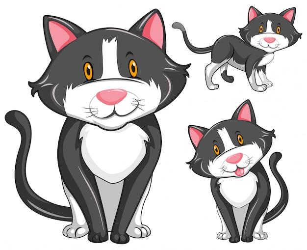 Kot w trzech różnych pozycjach