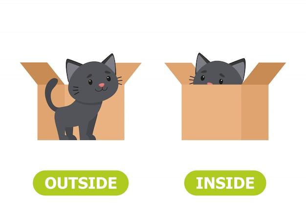 Kotek w pudełku i na zewnątrz