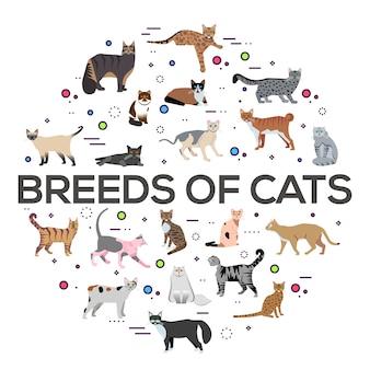 Koty rasy zestaw ikon koło. śliczne ilustracje zwierząt. kolekcja inny układ kotka